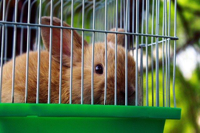 klatka dla królika